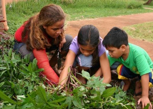 Serunya Aktivitas Berkebun Aktivitas Ini Sangat Bermanfaat Dunia