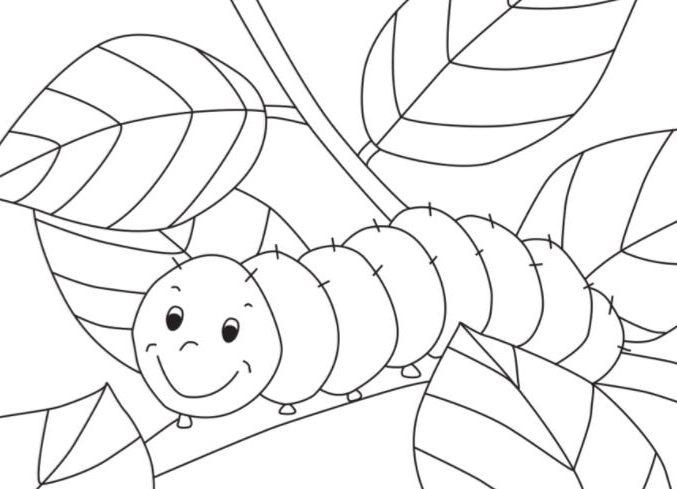 100 Gambar Untuk Mewarnai Anak Tk Tema Binatang